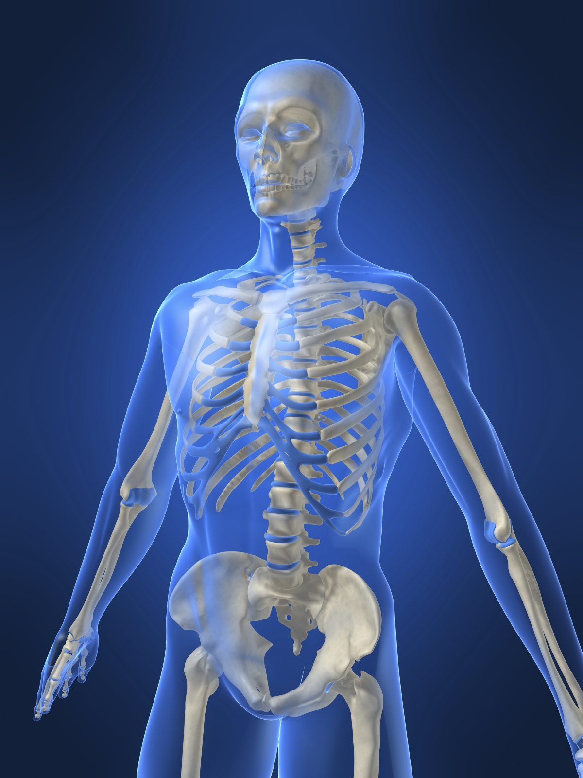 Bones And Muscles Homework Help Skeleton And Muscular System For