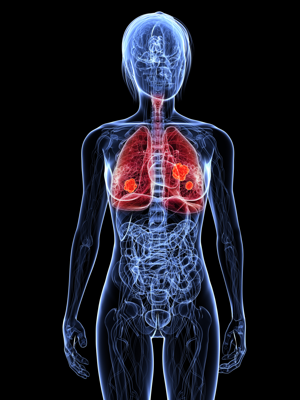 Human Respiratory System For Ks1 And Ks2 Children Lungs And