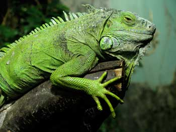 Reptiles for KS1 and KS2 children | Reptiles homework help