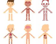 Anatomy for kids