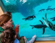 © Edinburgh Zoo