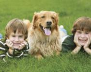 Brothers in the park with their dog