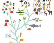 Evolution in biology