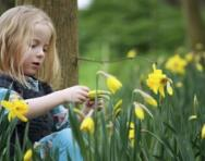 Girl and daffodils - spring learning activities