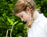 Primary school gardening projects