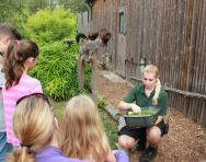 Walking with lemurs at Howletts Wild Animal Park