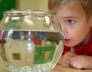 Boy looking at goldfish