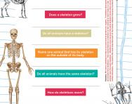 All about skeletons quiz worksheet