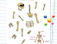 Boneyard Bill: build your own skeleton