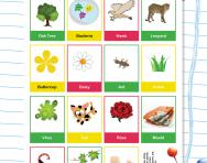 Classifying animals, plants, micro-organisms
