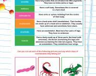 Classifying invertebrates worksheet