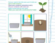 How do seeds grow worksheet