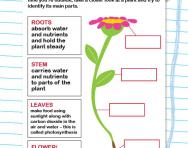 Identify the parts of a plant worksheet