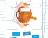 Label a human eye worksheet
