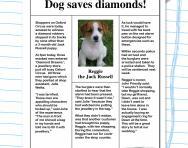 Reading comprehension: Dog saves diamonds