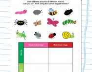 Sorting minibeasts worksheet