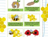 The life cycle of a bee worksheet