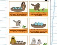 The life cycle of an owl worksheet