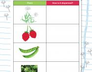 Thinking about seed dispersal worksheet