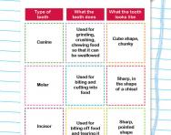 Types of teeth activity