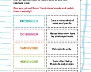 Understanding food chains activity
