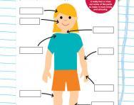 Understanding my body worksheet