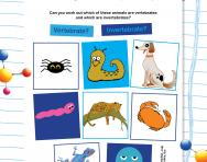 Vertebrate or invertebrate worksheet