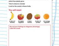 Where do seeds come from? activity