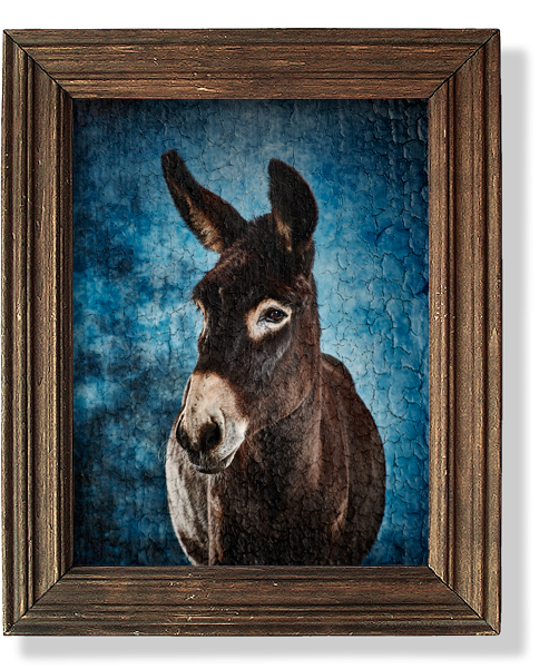 Adopt a Donkey with the Donkey Sanctuary