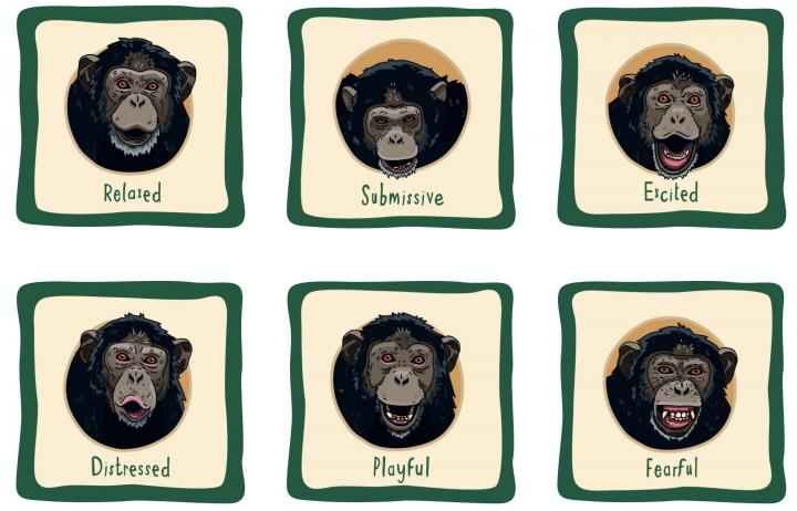 Chester Zoo Learning Resources
