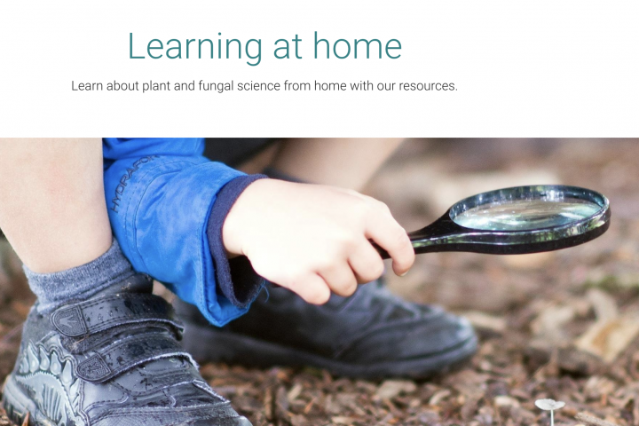 Kew Learning at Home