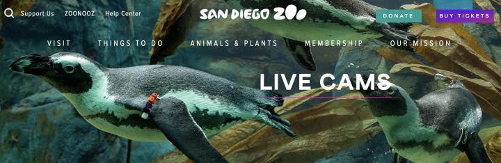 San Diego Zoo webcams