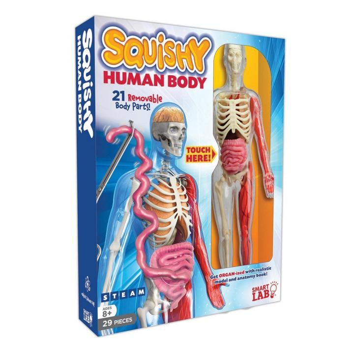 SmartLab Squishy Human Body