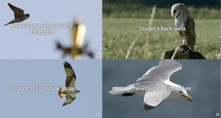Webcams provided by Wildlife Trusts across the British Isles