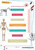 All about skeletons quiz worksheet