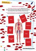 Blood and circulation worksheet