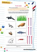 Food webs worksheet
