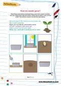 How do seeds grow worksheet