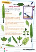 Looking at leaves activity