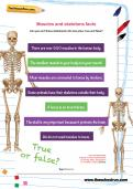 Muscles and skeletons facts worksheet