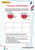 Pollination and fertilisation worksheet
