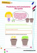 Predictions and conclusions: life cycles worksheet