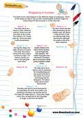 Pregnancy in humans worksheet