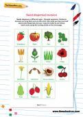 Seed dispersal revision worksheet