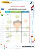 The human body and its parts worksheet