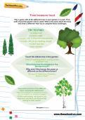 Tree treasure hunt