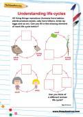 Understanding lifecycles worksheet