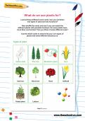 Year 3 science worksheets theschoolrun for What do we use trees for
