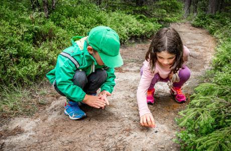 DIY Forest School activities
