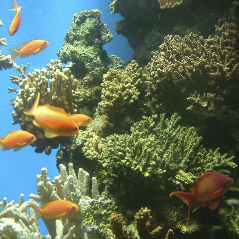 Homework Gnome marine habitats